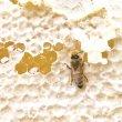画像3: 【全7回 20年5月〜】しぼりたてハチミツ頒布会(280g) (3)